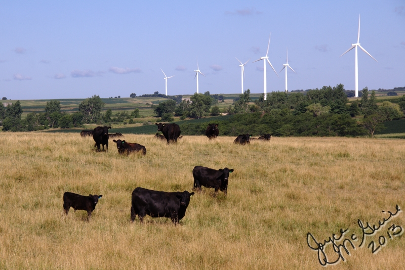 Cows and Wind Turbins